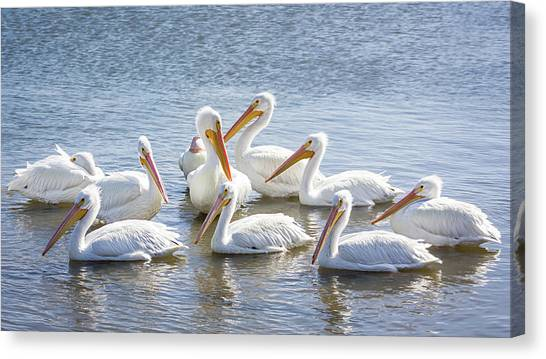 Pod Of Pelicans I Canvas Print