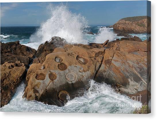 Point Lobos' Concretions Canvas Print
