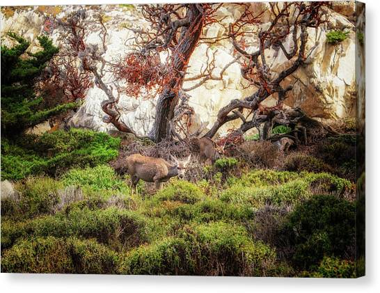 Point Lobos - Eden Canvas Print