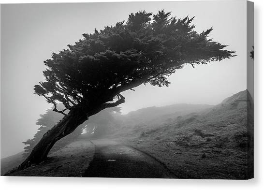 Point Reyes Fog Black And White Canvas Print