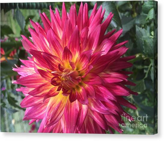 Pointed Dahlia Canvas Print