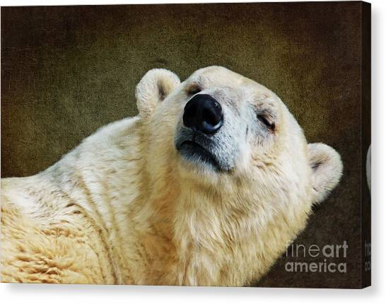 Polar Bears Canvas Print - Polar Bear by Angela Doelling AD DESIGN Photo and PhotoArt