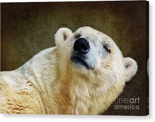 Polar Bear Canvas Print - Polar Bear by Angela Doelling AD DESIGN Photo and PhotoArt