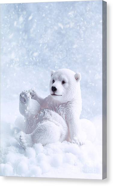Snowball Canvas Print - Polar Bear Figure by Amanda Elwell