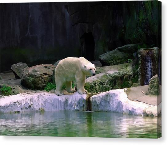 Polar Bear Canvas Print by Pat Carosone