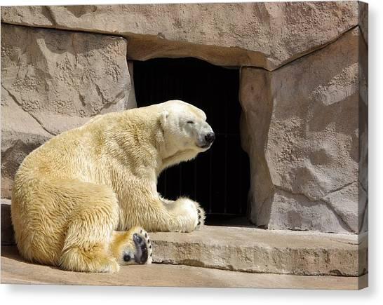 Polar Bear Prayers Canvas Print
