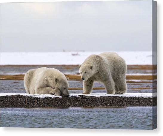 Polar Bear Zzzzzzz's Canvas Print