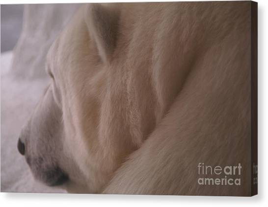 Polar Dream Canvas Print