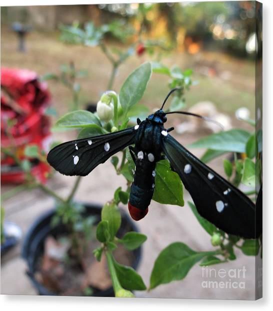 Polka Dot Wasp Moth Canvas Print