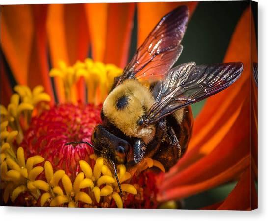 Pollen Plenty Canvas Print