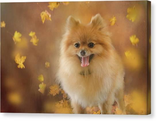 Pomeranian Canvas Print - Pomeranian by Margaret Goodwin