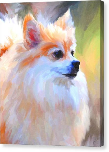 Pomeranians Canvas Print - Pomeranian Portrait by Jai Johnson