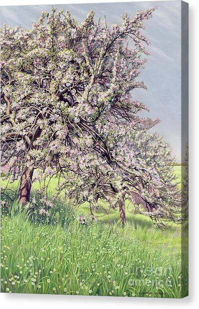 Wild Orchards Canvas Print - Pommiers Fleuris by Carlos Schwabe