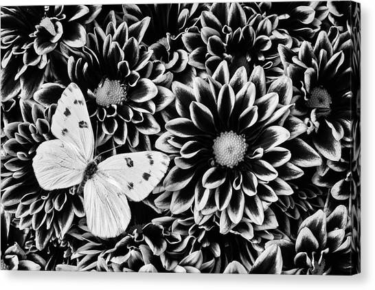 Pom-pom Canvas Print - Poms And Butterfly by Garry Gay