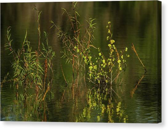 Pond Color Canvas Print