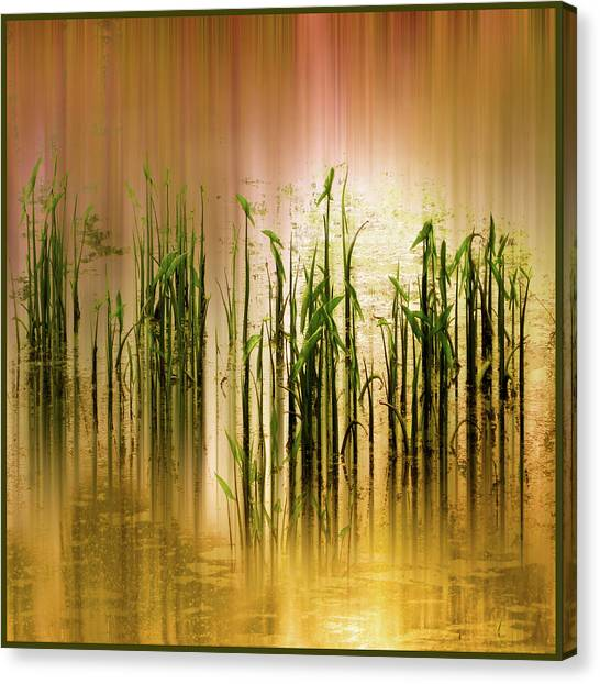 Canvas Print featuring the photograph Pond Grass Abstract   by Jessica Jenney