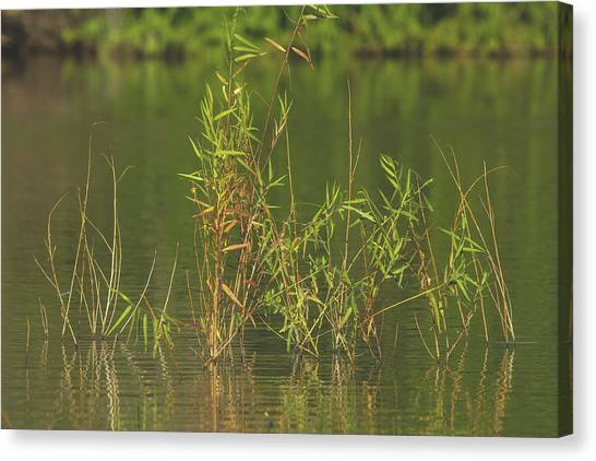 Pond Life Canvas Print