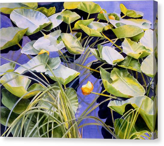 Wetlands Canvas Print - Pond Lilies by Sharon Freeman