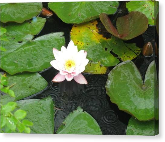 Pond Star Canvas Print by Frankie Graham