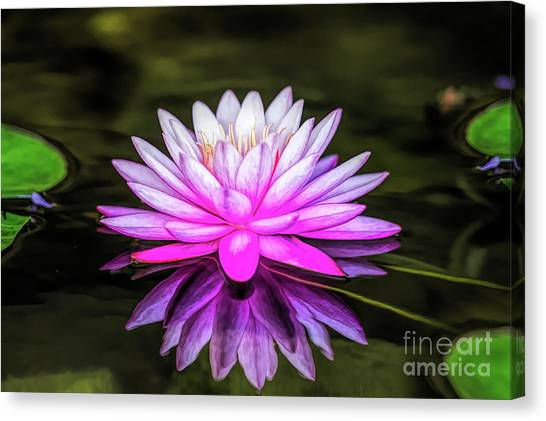 Pond Water Lily Canvas Print