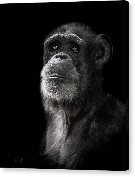 Primates Canvas Print - Ponder by Paul Neville