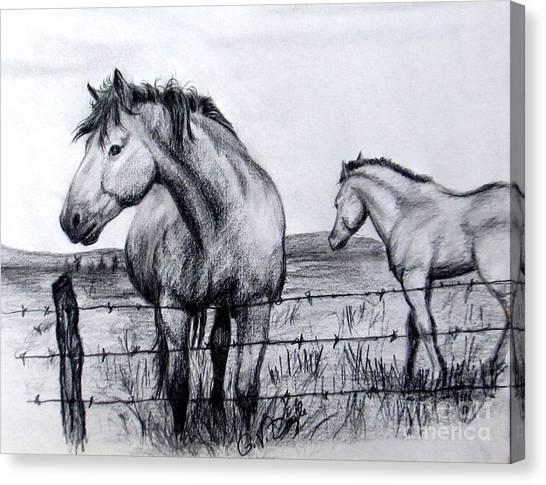 Ponder Texas Horses Canvas Print
