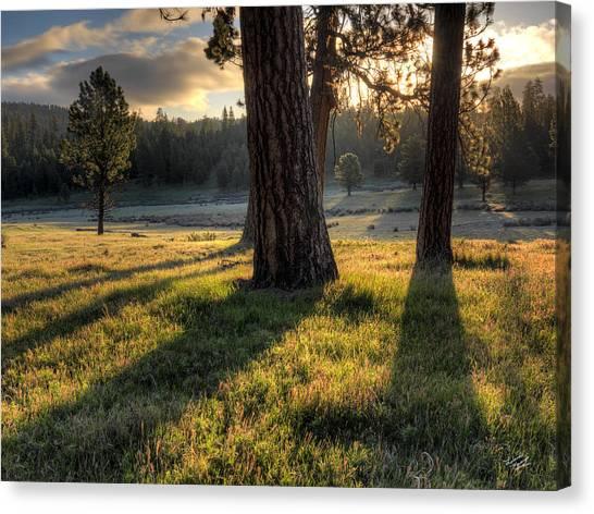 Ponderosa Pine Meadow Canvas Print by Leland D Howard