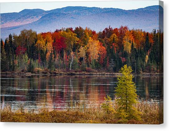 Pondicherry Fall Foliage Reflection Canvas Print