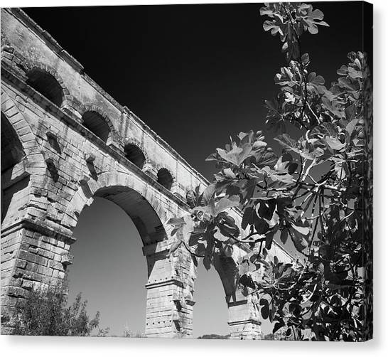 Pont Du Gard And Fig Tree Canvas Print