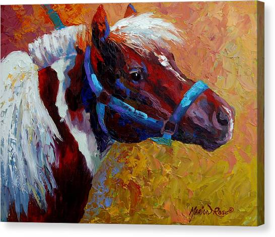 Ponies Canvas Print - Pony Boy by Marion Rose