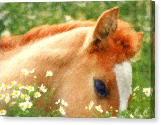 Stallions Canvas Print - Pony In The Poppies by Tom Mc Nemar