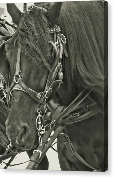 Pony Rides Canvas Print by Dressage Design