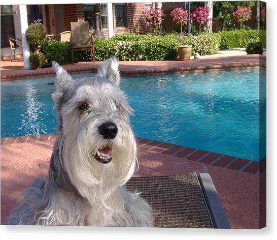 Pooch At Poolside Canvas Print