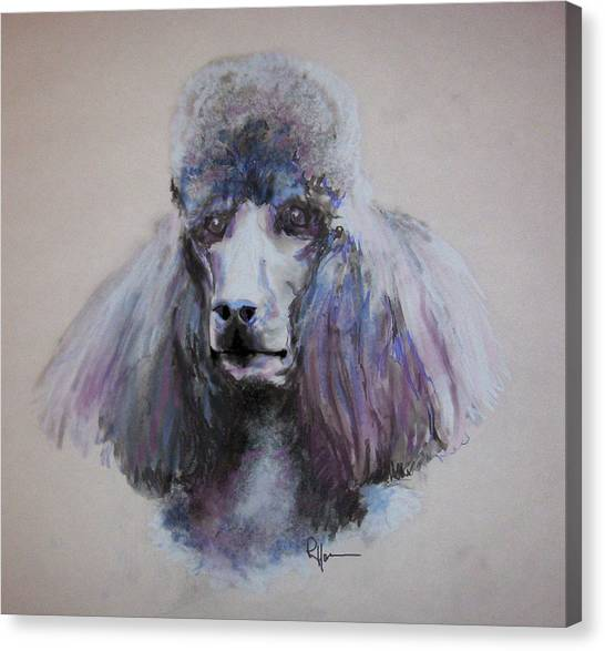 Poodle In Blue Canvas Print