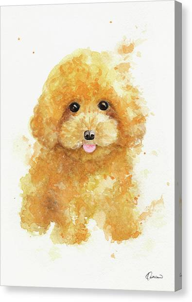 Poodles Canvas Print - Poodle Puppy by Kathleen Wong