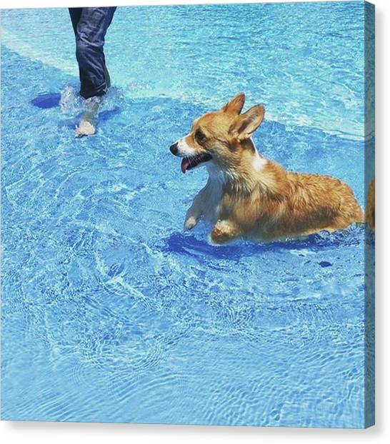 Japanese Canvas Print - Pool For Dogs by Kentaro Harada