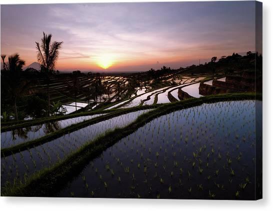Pools Of Rice Canvas Print