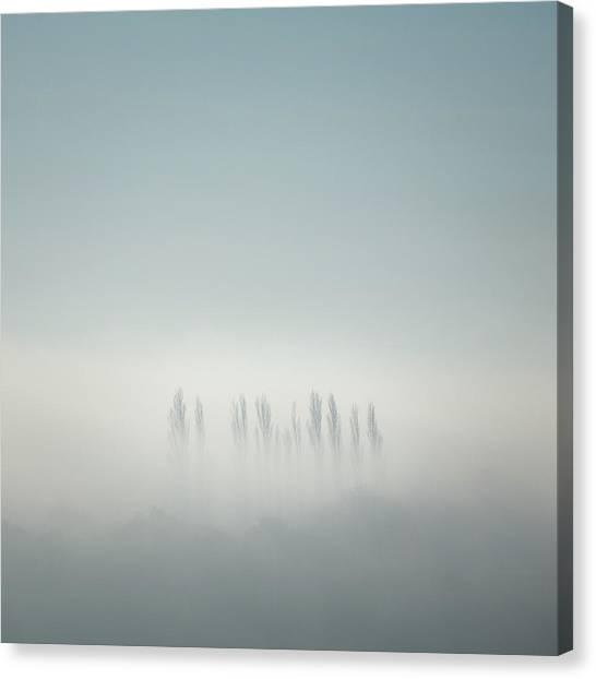 Nottinghamshire Canvas Print - Poplars by Chris Dale