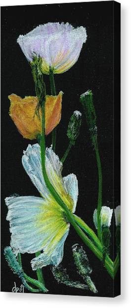 Poppies 1 Canvas Print