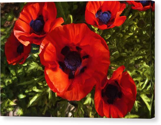 Poppies 1 Canvas Print