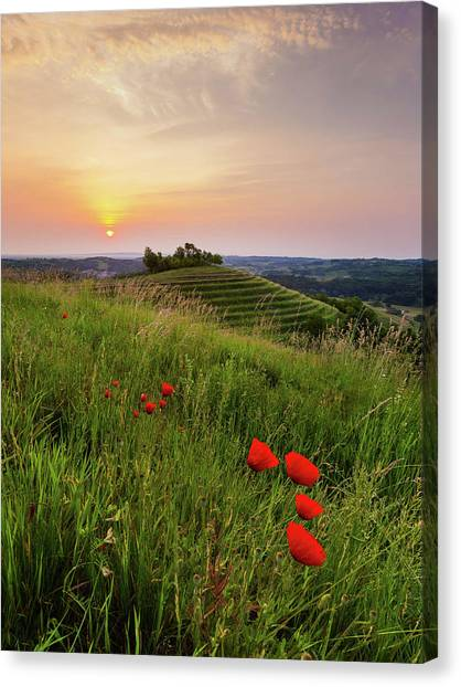 Canvas Print featuring the photograph Poppies Burns by Davor Zerjav