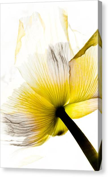 Poppy Flower Art Canvas Print by Frank Tschakert
