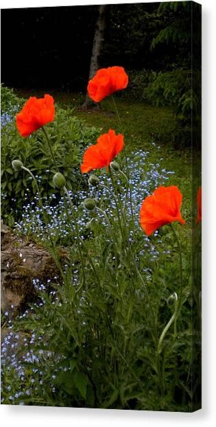 Poppy Foursome Canvas Print