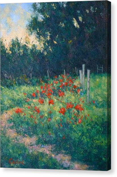 Poppy Garden Canvas Print by Gene Cadore