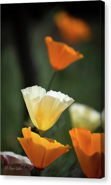 Poppy Glow Canvas Print