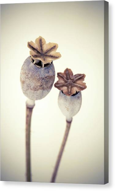 Canvas Print - Poppy Heads 02 by Richard Nixon
