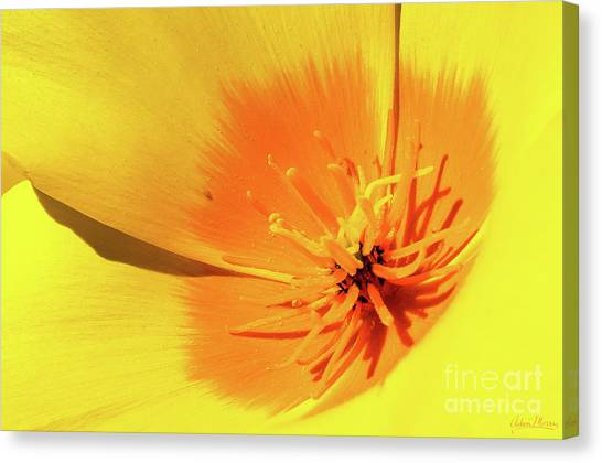 Poppy Impact Canvas Print