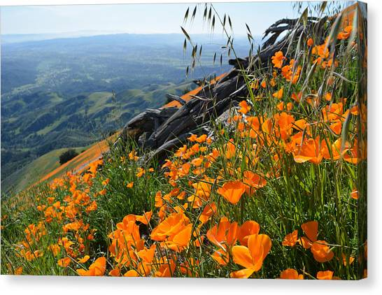 Poppy Mountain  Canvas Print