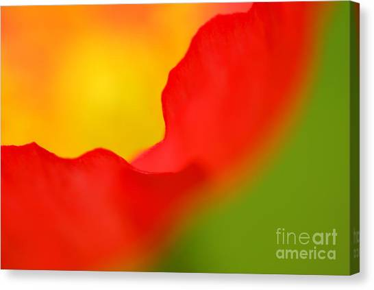Close Up Canvas Print - Poppy by Silke Magino