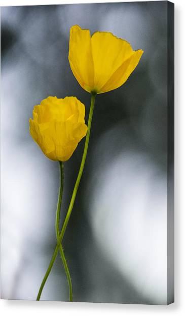 Poppys Canvas Print - Poppys  by Jeff Klingler